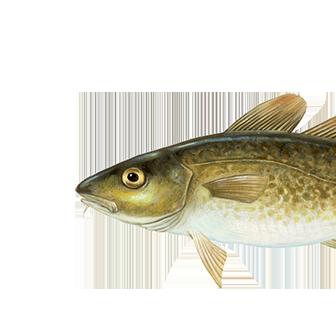 Μπακαλιαρος cod